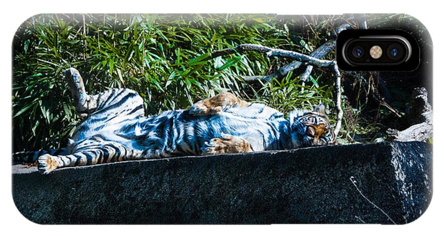 Tiger IPhone X Case featuring the photograph Kickin Back In The Sun by Rich Priest