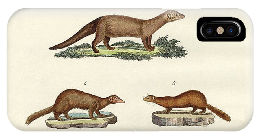 Common Otter IPhone X Case featuring the drawing Kinds Of Otters And Marten by Splendid Art Prints