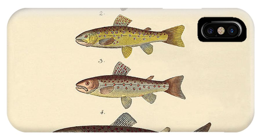 Sea Trout IPhone X Case featuring the drawing Kinds Of Trouts by Splendid Art Prints