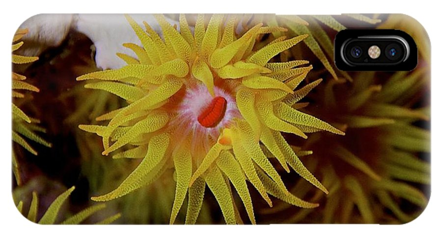 Uw Water Anemone Reef IPhone X Case featuring the photograph Kiss Me by Jesper Andersen