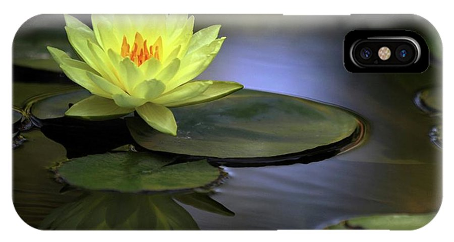 Water Lily IPhone X Case featuring the photograph Kissed By The Sun by Sabrina L Ryan