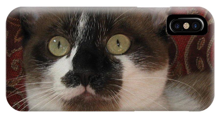 Kitten IPhone X Case featuring the photograph Kitten Black On Chocolate Silktapestrycatstm by Pamela Benham