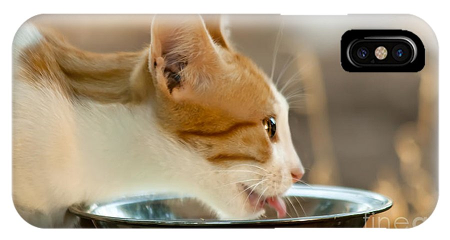 Kitten IPhone X Case featuring the photograph Kitten Licking Up Her Milk by Leyla Ismet