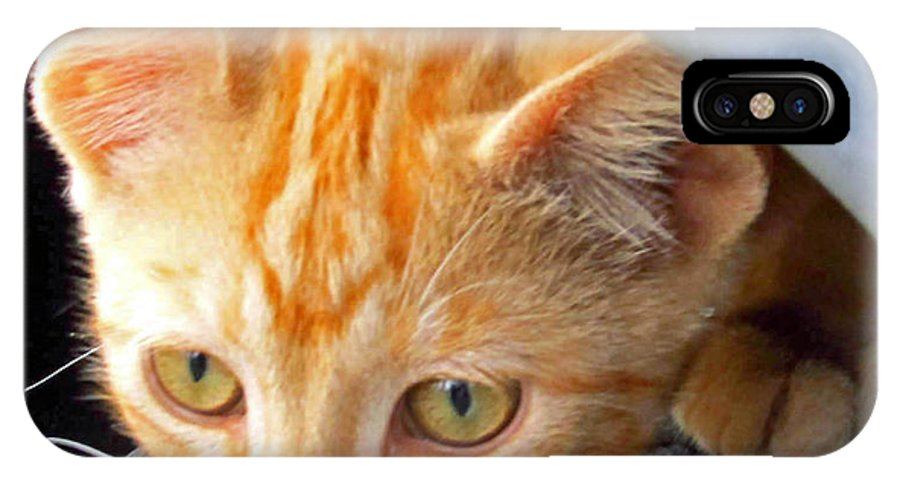 Kittens IPhone X Case featuring the photograph Kitty Under The Hood by Tina M Wenger