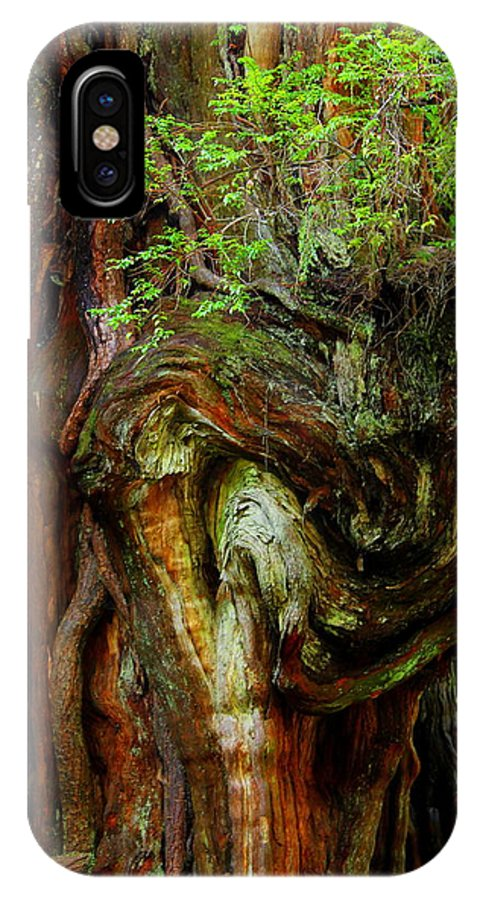 Cedar Tree IPhone X Case featuring the photograph Knot On A Giant by Jeanette C Landstrom