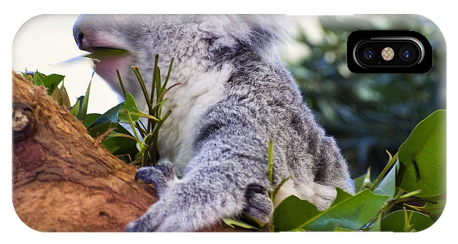 Koala IPhone X Case featuring the photograph Koala Eating In A Tree by Chris Flees