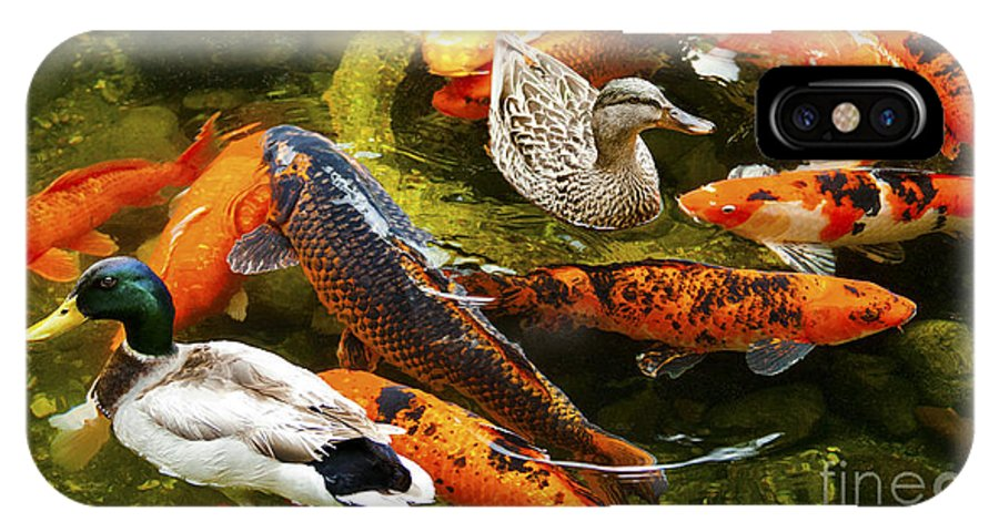 Koi Fish Photographs IPhone X Case featuring the photograph Koi Fish In Pond Swimming With Two Mallard Ducks by Jerry Cowart