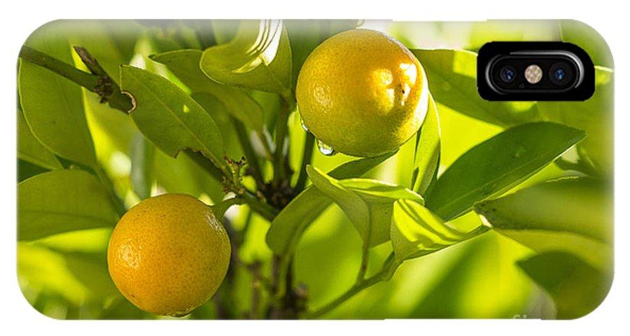 Australia IPhone X Case featuring the photograph Kumquats by Steven Ralser