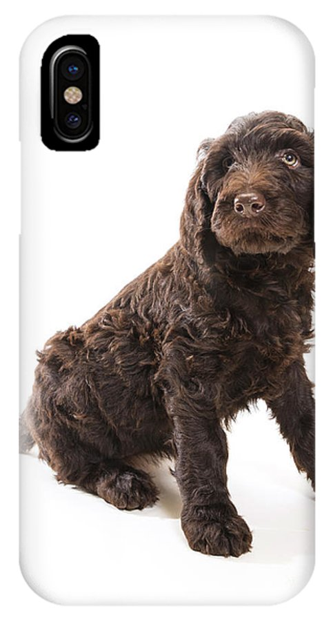 Animal IPhone X Case featuring the photograph Labradoodle Looking Up by Gord Horne