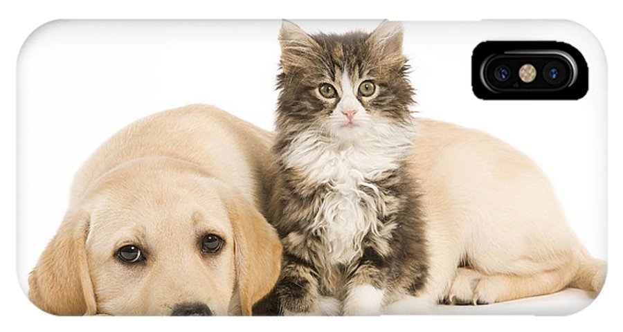 Cat IPhone X / XS Case featuring the photograph Labrador And Forest Cat by Jean-Michel Labat