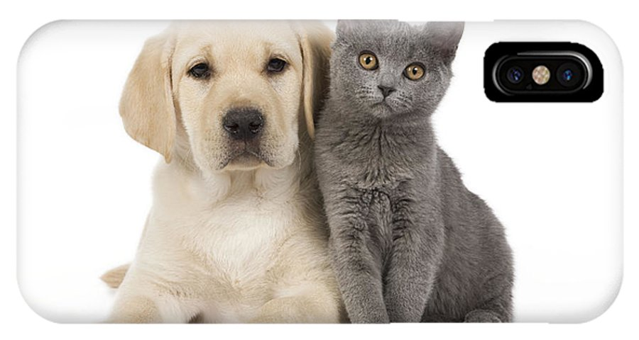 Labrador Retriever IPhone X / XS Case featuring the photograph Labrador Puppy With Chartreux Kitten by Jean-Michel Labat