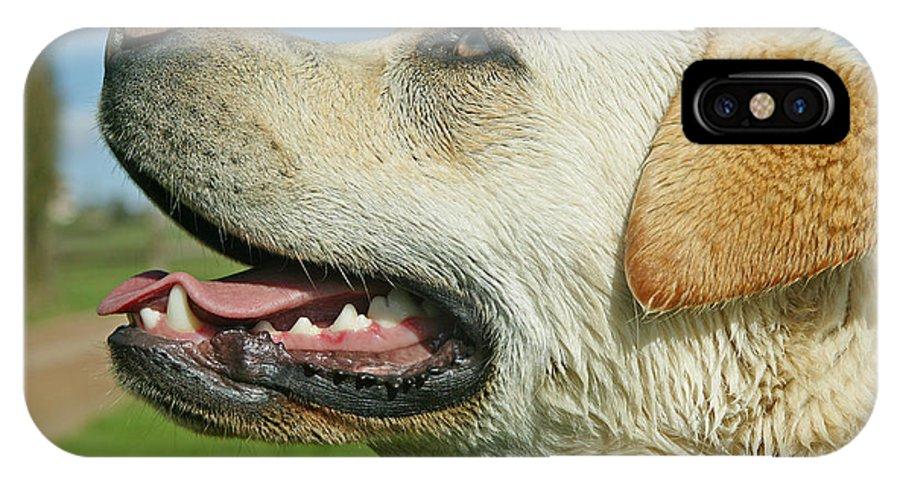 Labrador Retriever IPhone X / XS Case featuring the photograph Labrador Retriever Dog by Jean-Michel Labat