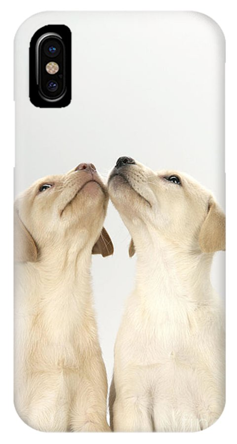 Labrador Retriever IPhone X / XS Case featuring the photograph Labrador Retriever Puppies by John Daniels