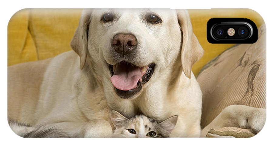 Labrador Retriever IPhone X / XS Case featuring the photograph Labrador With Cat by Jean-Michel Labat