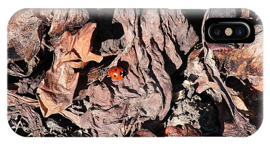 Lady Bug IPhone X Case featuring the photograph Lady Bug In Spring by Ann E Robson