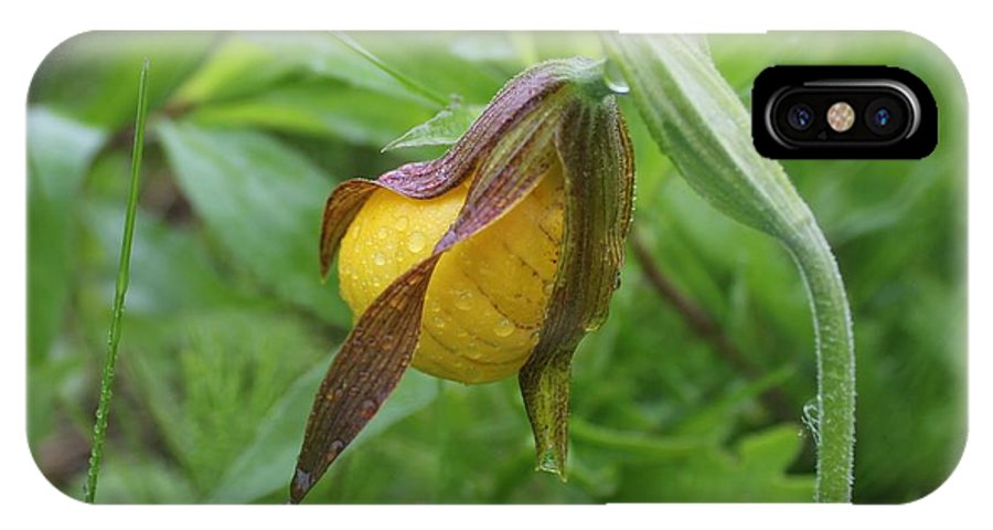 Lady's Slipper IPhone X Case featuring the photograph Lady Slipper Bud by Ruth Kamenev