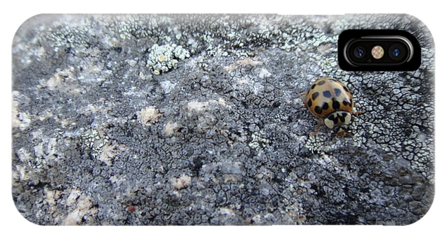 Ladybug IPhone X Case featuring the photograph Ladybug by Ara Wilnas