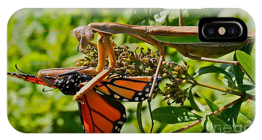 Monarch IPhone X Case featuring the photograph Last Dance by Rick Monyahan