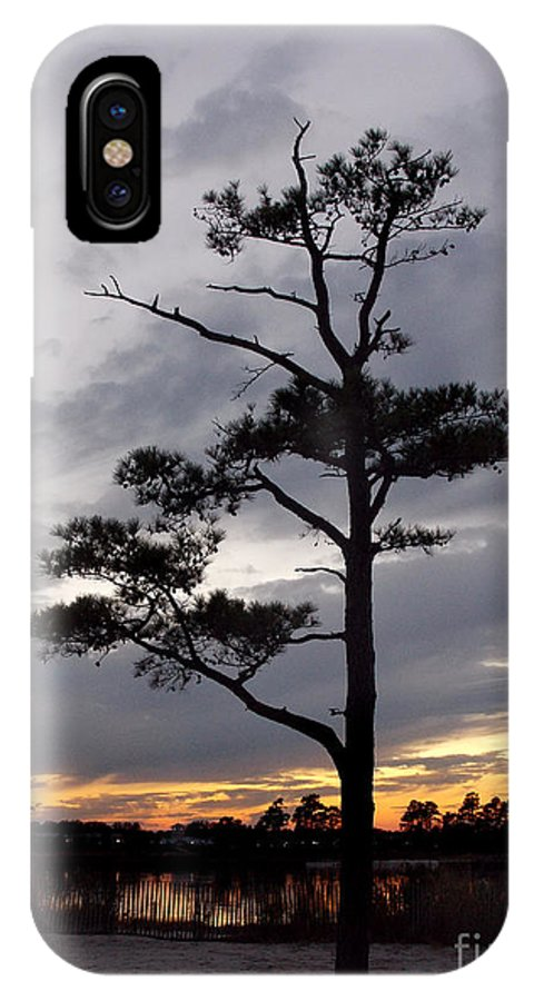 Scenic Tours IPhone X Case featuring the photograph Last Tree Standing by Skip Willits