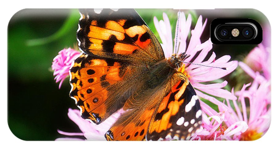 Flower IPhone X Case featuring the photograph Late Summer Painted Lady by Marilyn Hunt