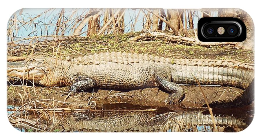 Marsh IPhone X Case featuring the photograph Later Gator by Archer
