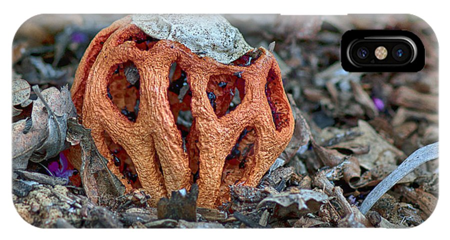 Latticed Stinkhorn IPhone X Case featuring the photograph Latticed Stinkhorn by Betty Depee
