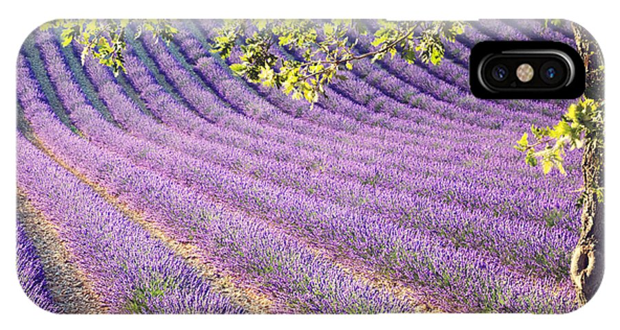 Lavender IPhone X Case featuring the photograph Lavender Field In France by Matteo Colombo