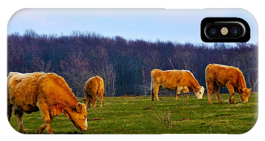 Cow IPhone X Case featuring the photograph Lazy Meadow by Ron Haist