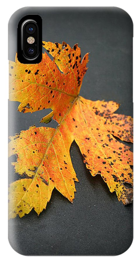 Nature IPhone X Case featuring the photograph Leaf Portrait by Linda Sannuti