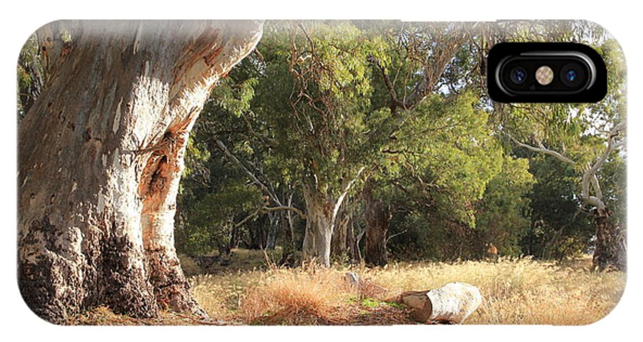 Old Gum Tree IPhone X Case featuring the photograph Leaning Old Gum by Philip Hartnett