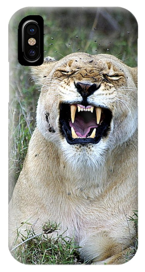Lion IPhone X Case featuring the photograph Leave Me Alone by Marc Levine