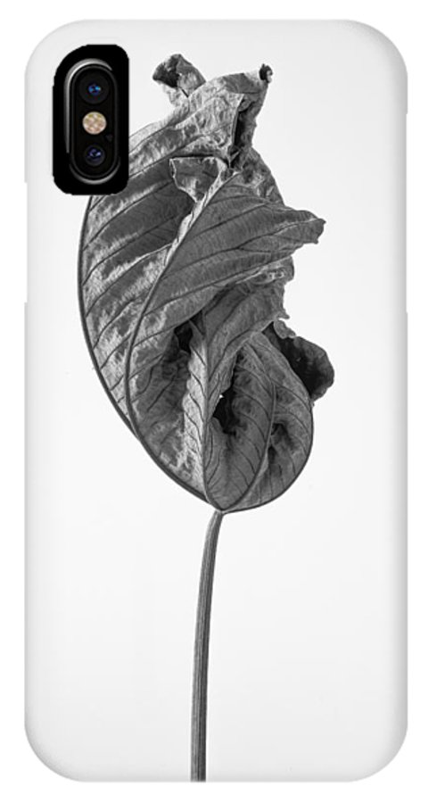 Leaves IPhone X Case featuring the photograph Leaves After Life - Nineteen by Widarto Adi