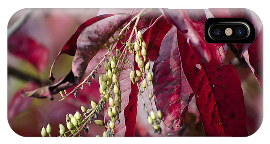 Leaves IPhone X Case featuring the photograph Leaves Of Autumn by Sam Gustin