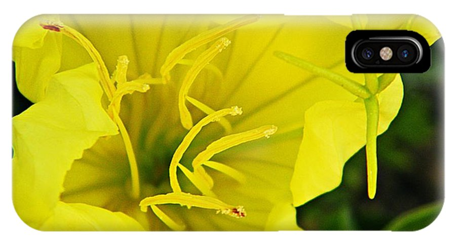 Nature IPhone X Case featuring the photograph Lemon Sundrop by Chris Berry