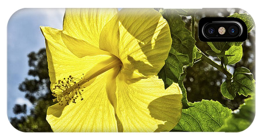 Flower Photography IPhone X Case featuring the photograph Lemon Yellow Hibiscus by Louise Hill
