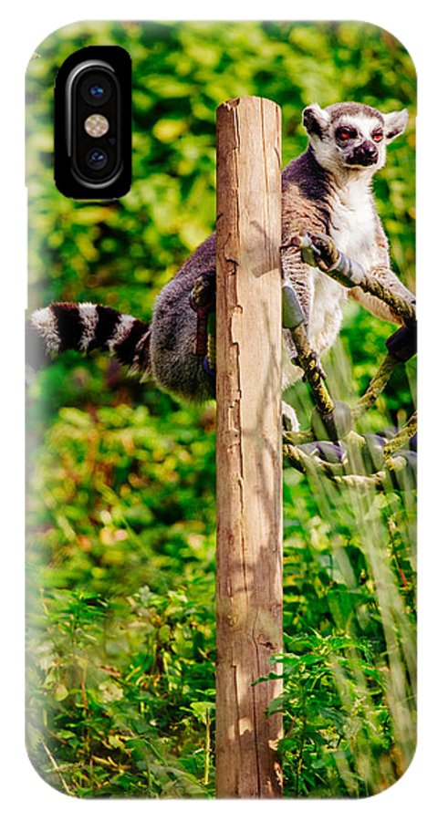 Nature IPhone X Case featuring the photograph Lemur In The Green by Pati Photography