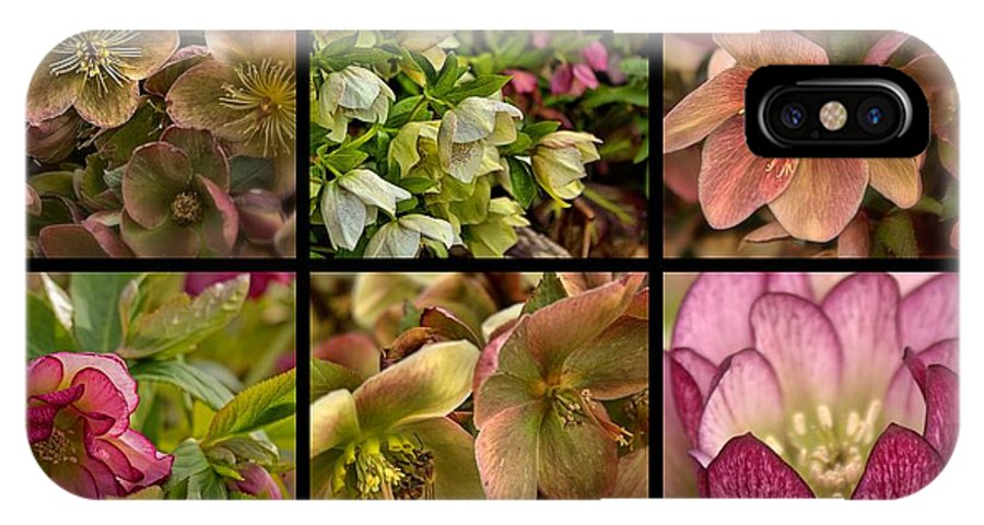 Collage IPhone X Case featuring the photograph Lenten Rose Collage by Mel Hensley
