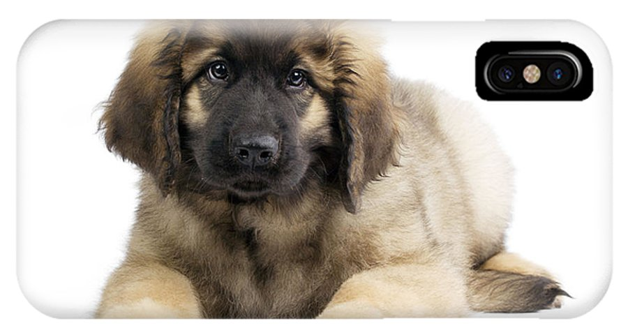 Leonberger IPhone X / XS Case featuring the photograph Leonberger Puppy by Jean-Michel Labat