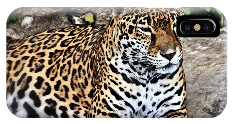 Leopard IPhone X Case featuring the photograph Leopard At Rest by Marty Koch