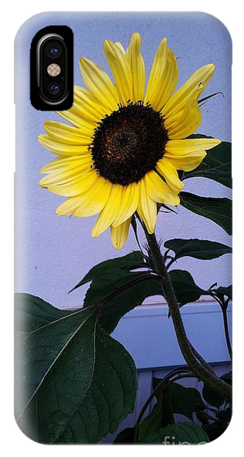 Sunflowers IPhone X Case featuring the photograph Let Me Brighten Your Day by Laurrie Lloyd