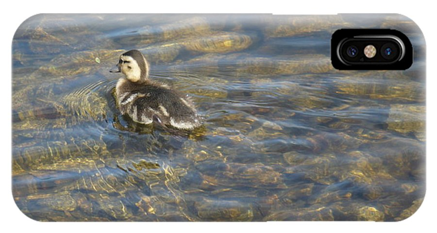 Duckling IPhone X Case featuring the photograph Let's Go by Nicki Bennett