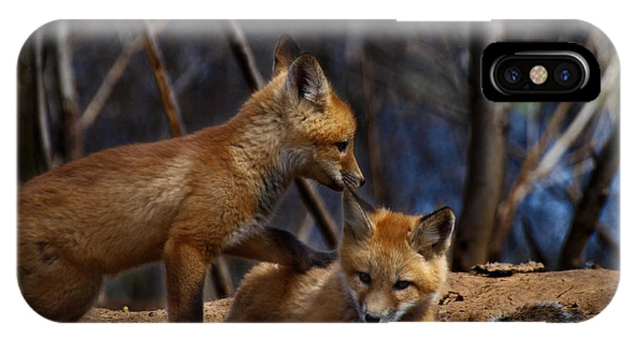 Kit Fox IPhone X Case featuring the photograph Lets Play Together by Thomas Young