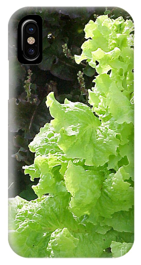 Lettuce IPhone X Case featuring the photograph Lettuce Run Amok by Betsy Cotton