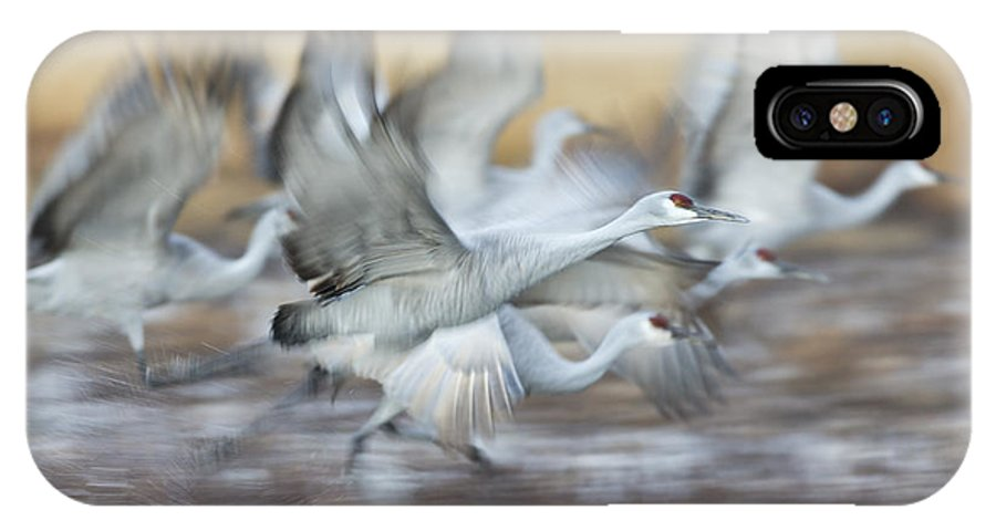 Sandhill Crane IPhone X / XS Case featuring the photograph Liftoff by Bryan Keil