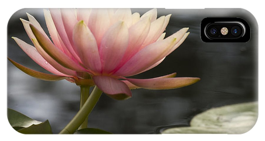 Water IPhone X Case featuring the photograph Light Pink Water Lily by Jean Noren