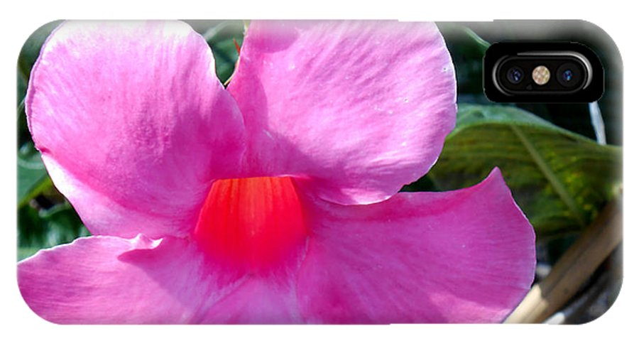 Botanical IPhone X Case featuring the photograph Light Within A Mandevilla by Eva Thomas