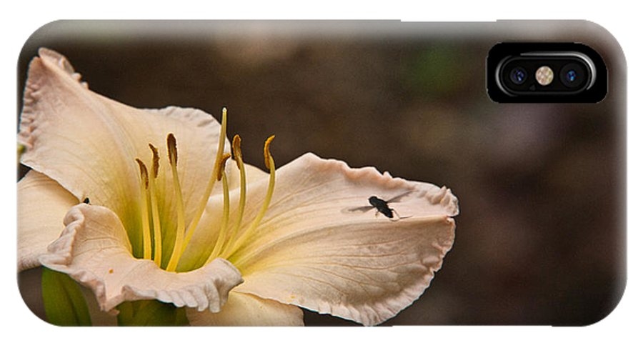 Fly IPhone X Case featuring the photograph Lily With Fly by Douglas Barnett