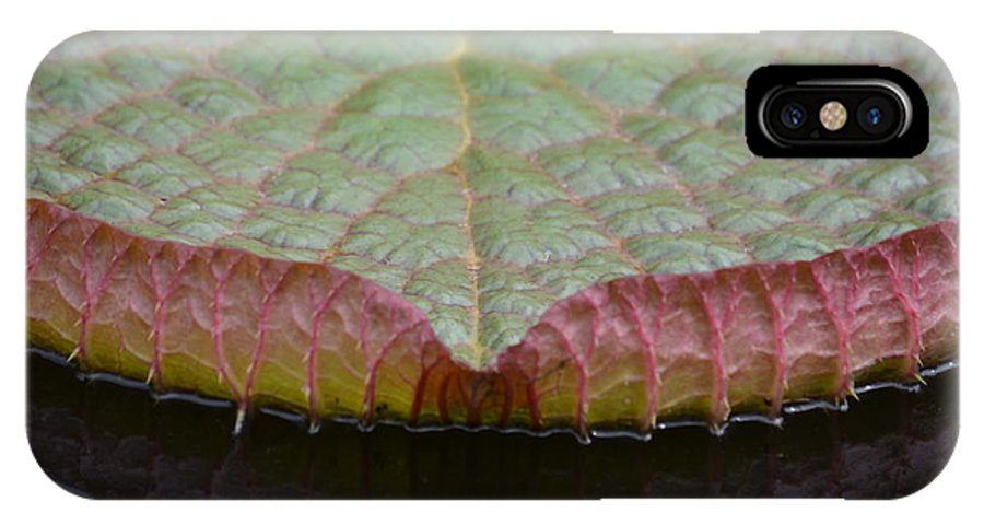 Lilypad Abstract IPhone X Case featuring the photograph Lilypad Abstract by Maria Urso