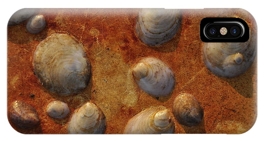 Shells IPhone X Case featuring the photograph Limpets On Steel by Michael Dyer