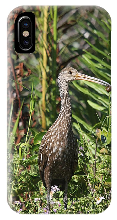 Limpkin IPhone X Case featuring the photograph Limpkin With An Apple Snail by Christiane Schulze Art And Photography